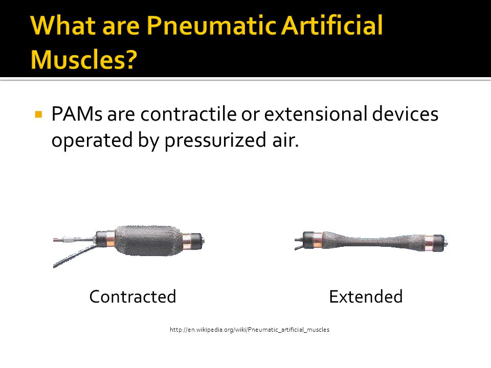 What are Pneumatic Artificial Muscles