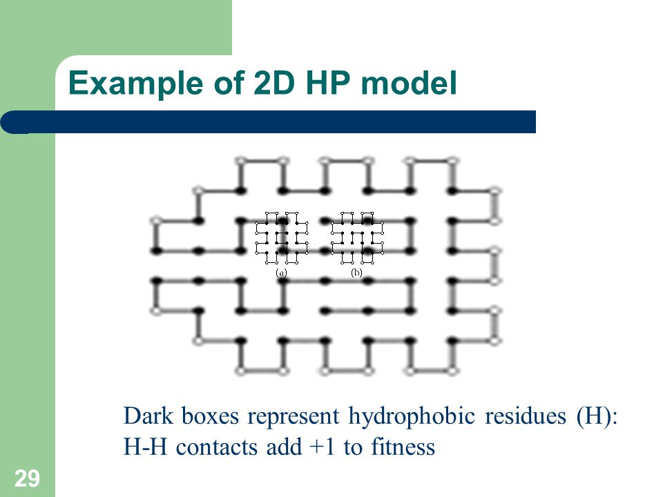 Example of 2D HP model Dark boxes represent hydrophobic residues (H):
