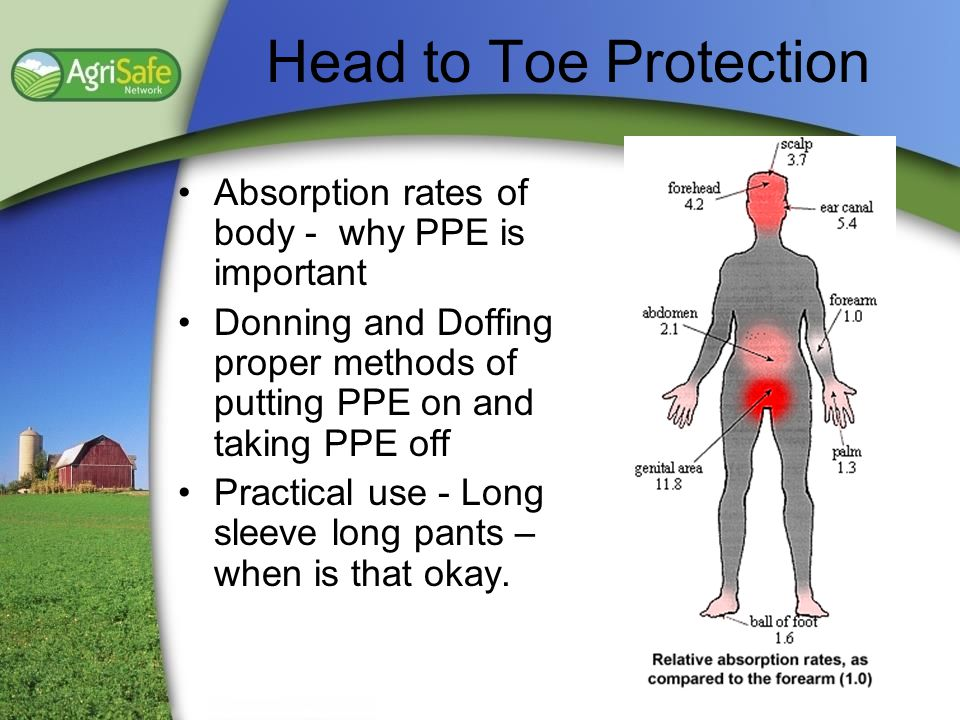 Head to Toe Protection Absorption rates of body - why PPE is important