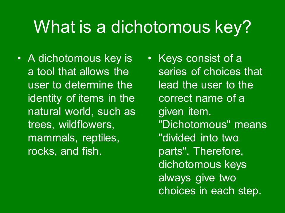 What is a dichotomous key