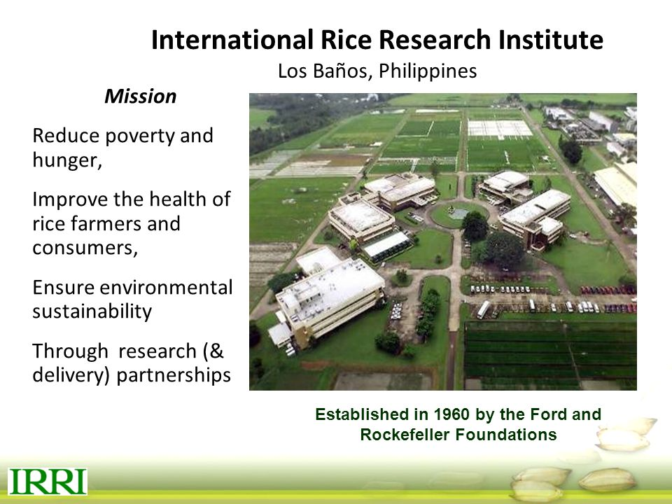 International Rice Research Institute Los Baños, Philippines