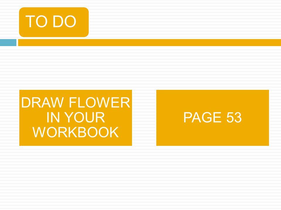 DRAW FLOWER IN YOUR WORKBOOK