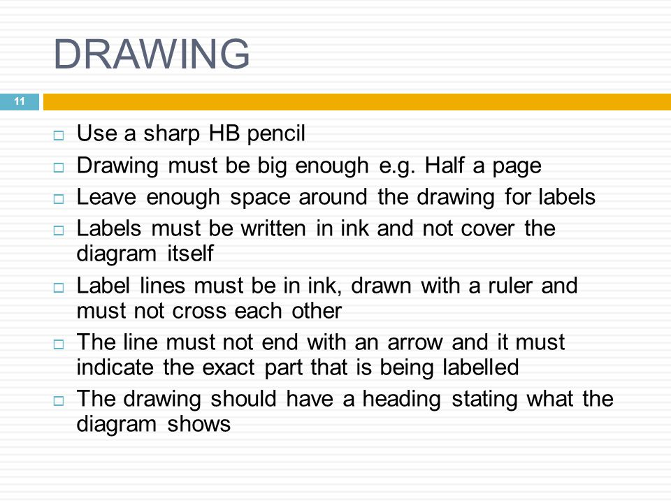 DRAWING Use a sharp HB pencil