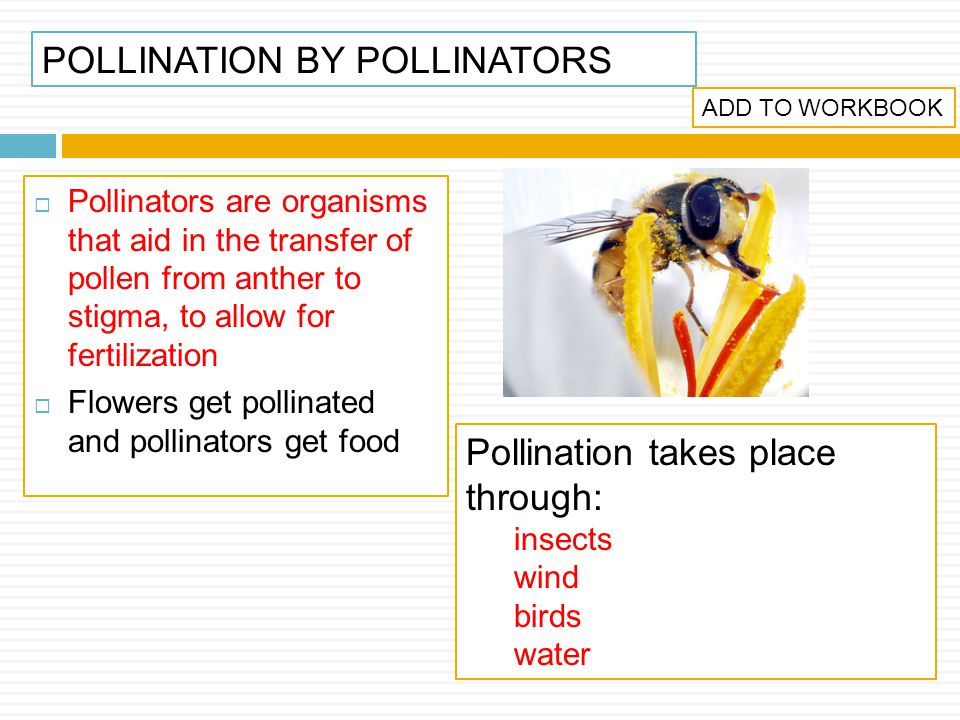 POLLINATION BY POLLINATORS
