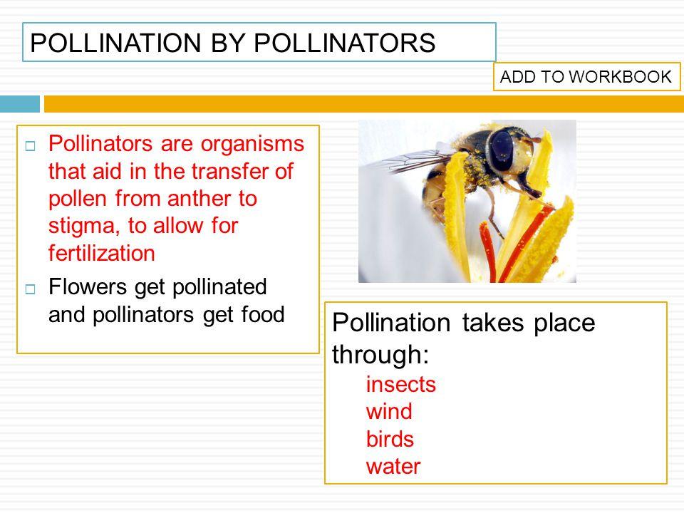 POLLINATION BY POLLINATORS