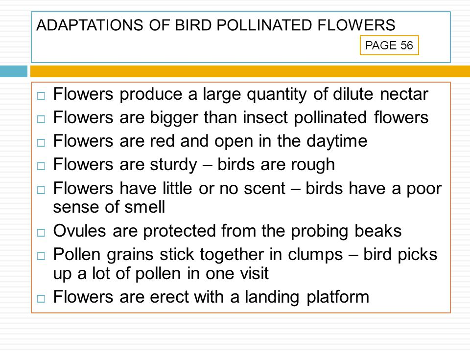 ADAPTATIONS OF BIRD POLLINATED FLOWERS