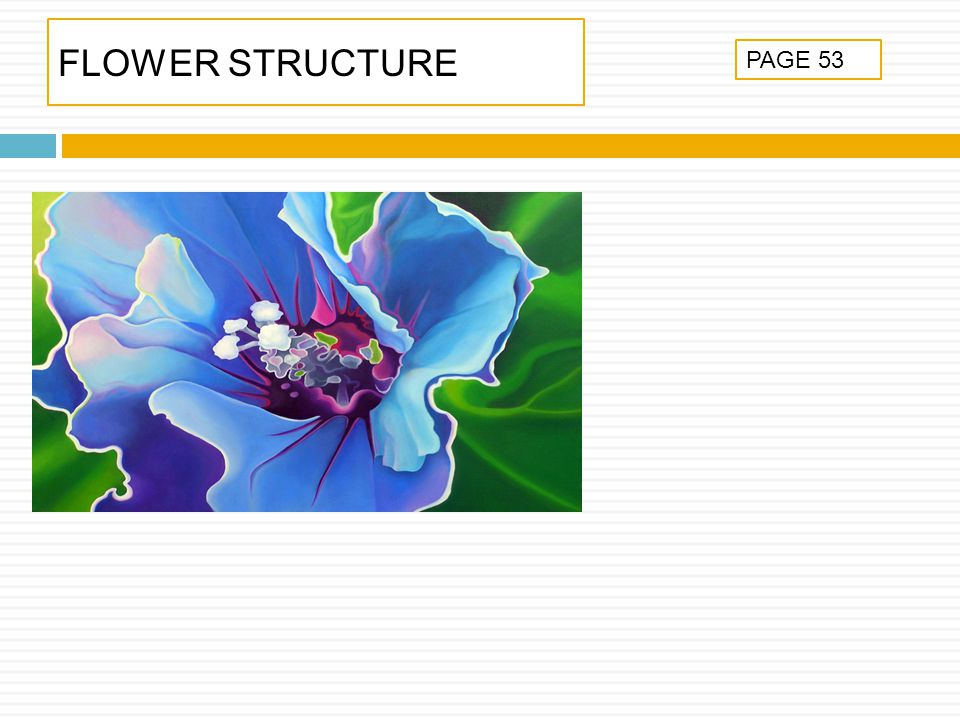 FLOWER STRUCTURE PAGE 53