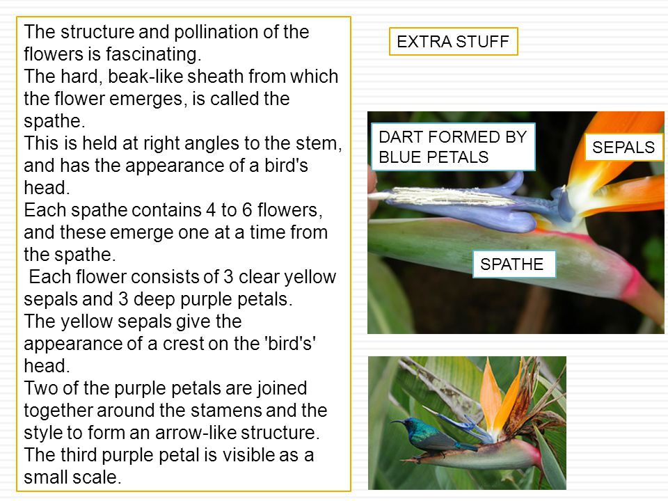 The structure and pollination of the flowers is fascinating.
