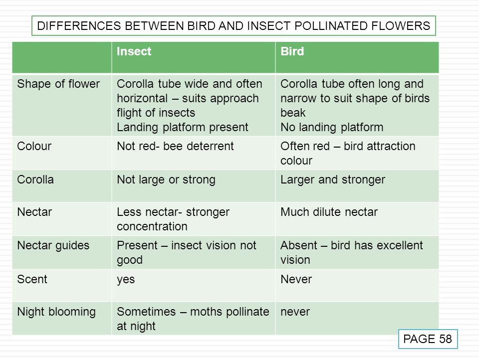 DIFFERENCES BETWEEN BIRD AND INSECT POLLINATED FLOWERS