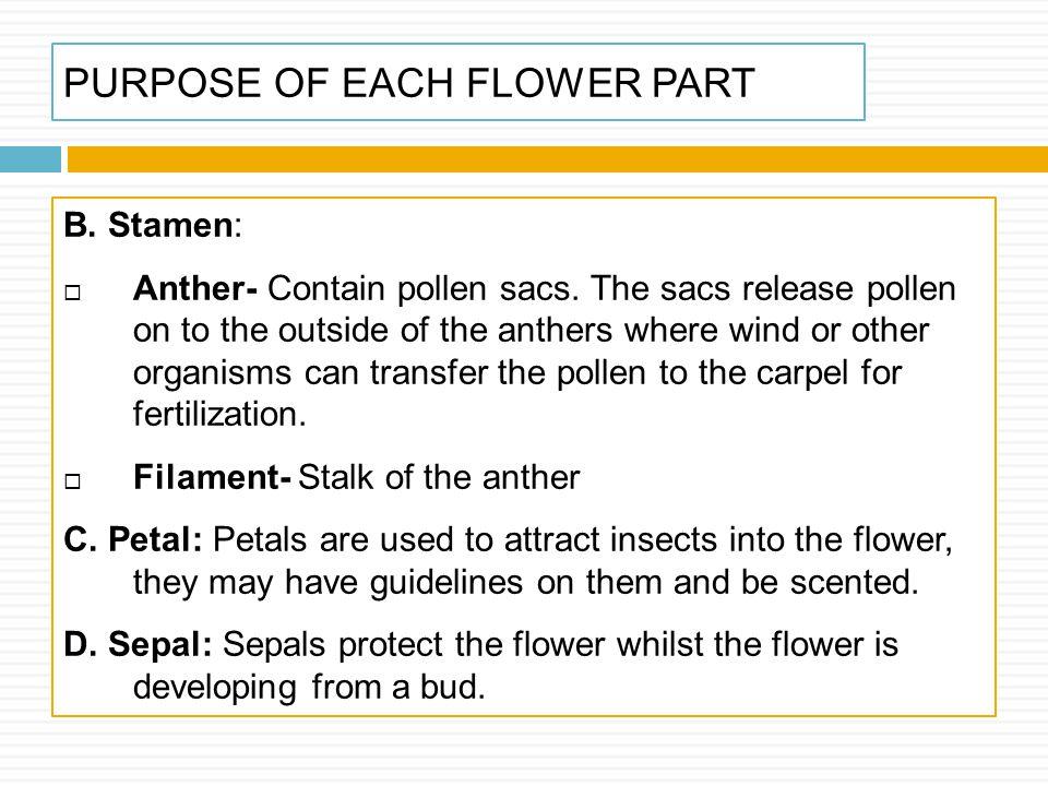 PURPOSE OF EACH FLOWER PART
