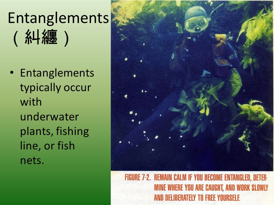 Entanglements (糾纏) Entanglements typically occur with underwater plants, fishing line, or fish nets.