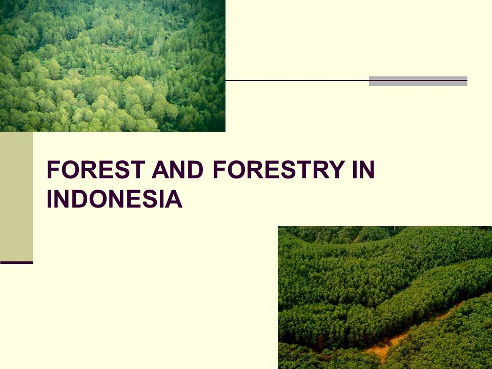 FOREST AND FORESTRY IN INDONESIA