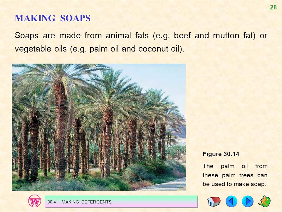 MAKING SOAPS Soaps are made from animal fats (e.g. beef and mutton fat) or vegetable oils (e.g. palm oil and coconut oil).