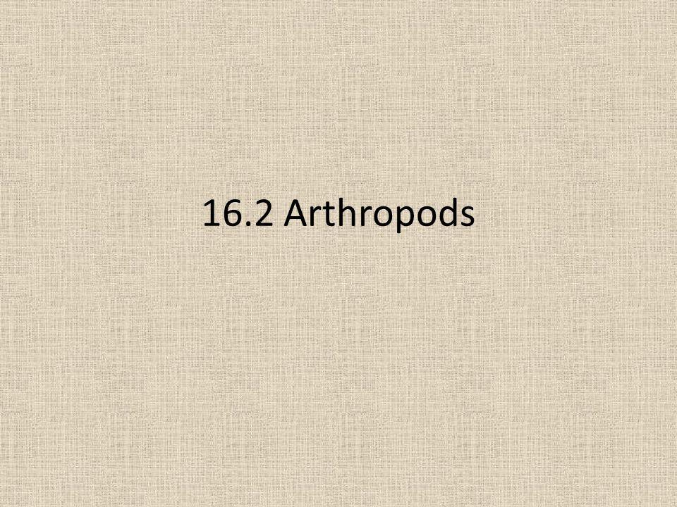 16.2 Arthropods