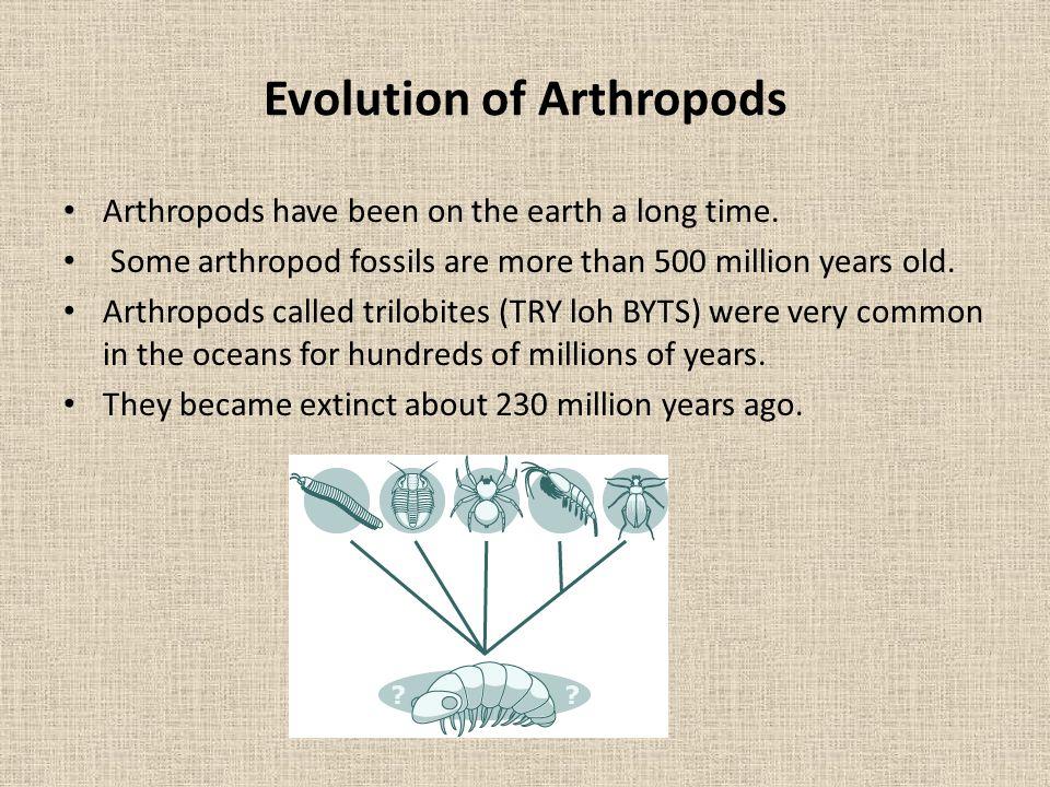 Evolution of Arthropods