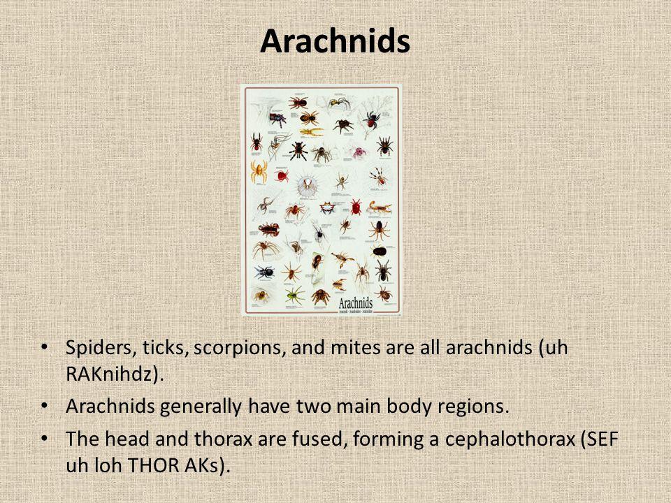 Arachnids Spiders, ticks, scorpions, and mites are all arachnids (uh RAKnihdz). Arachnids generally have two main body regions.