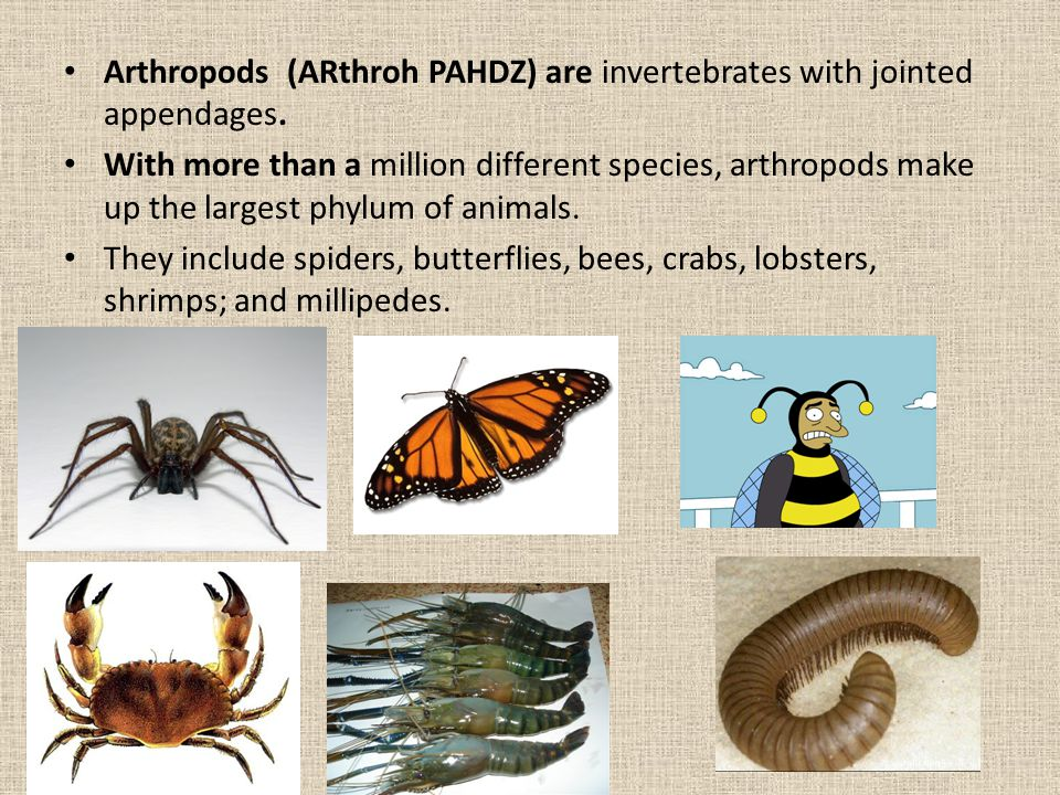 Arthropods (ARthroh PAHDZ) are invertebrates with jointed appendages.