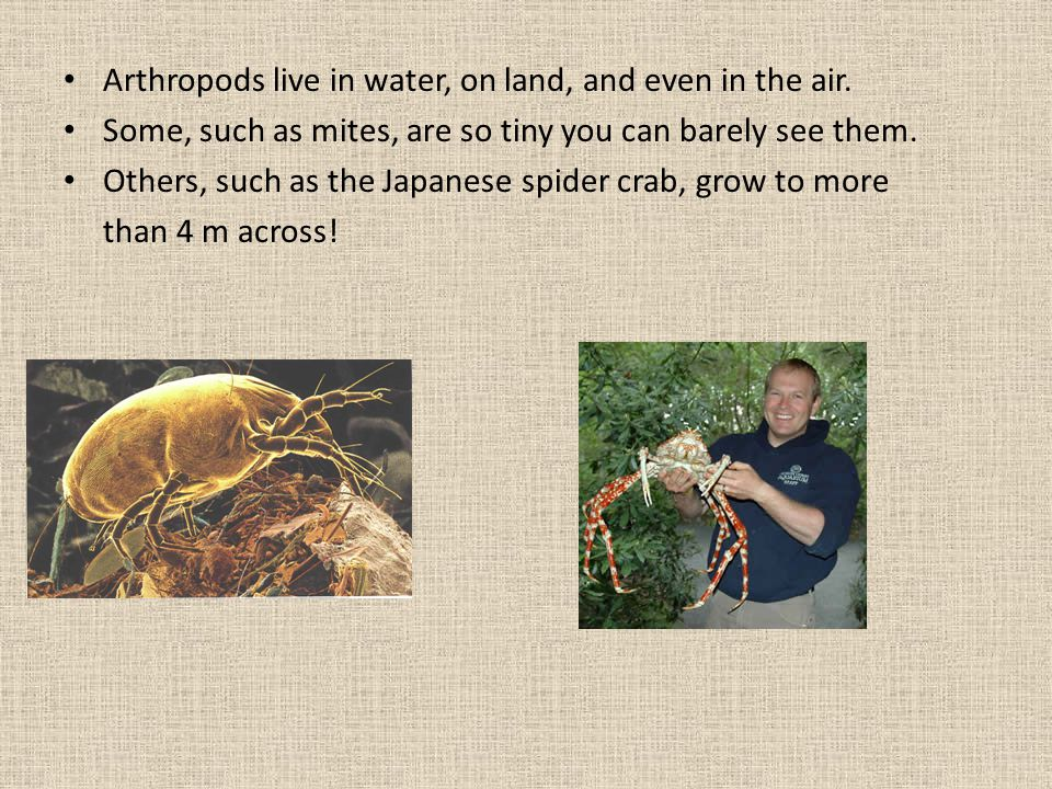 Arthropods live in water, on land, and even in the air.