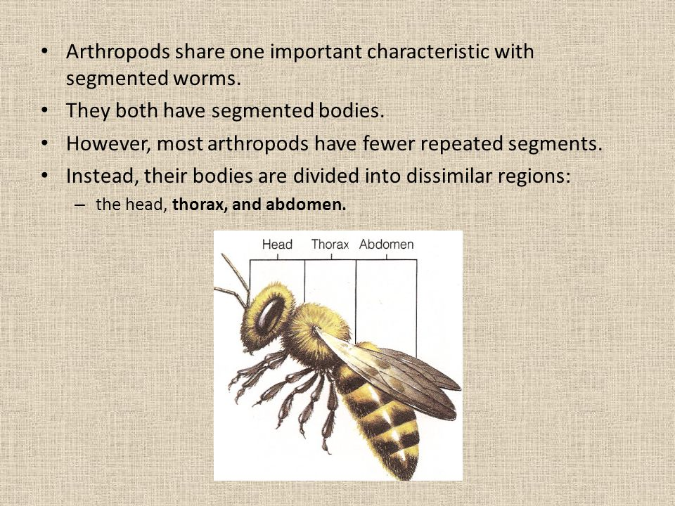 Arthropods share one important characteristic with segmented worms.