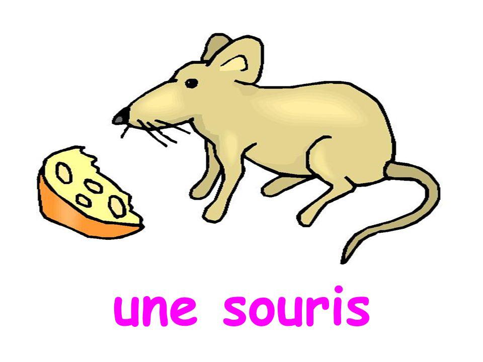une souris