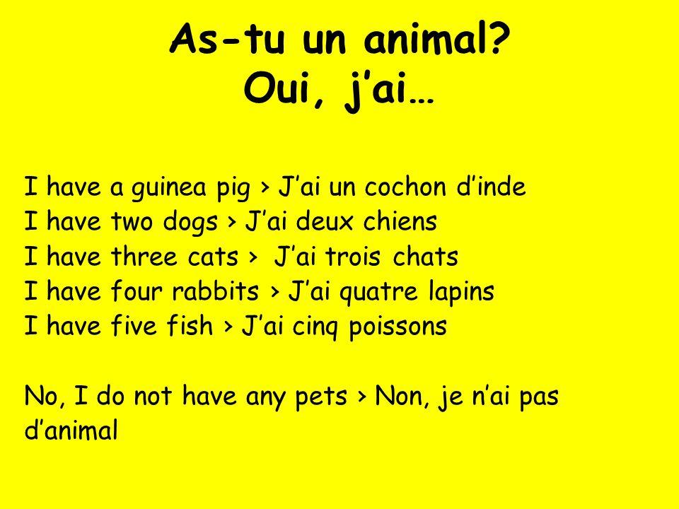 As-tu un animal Oui, j'ai…