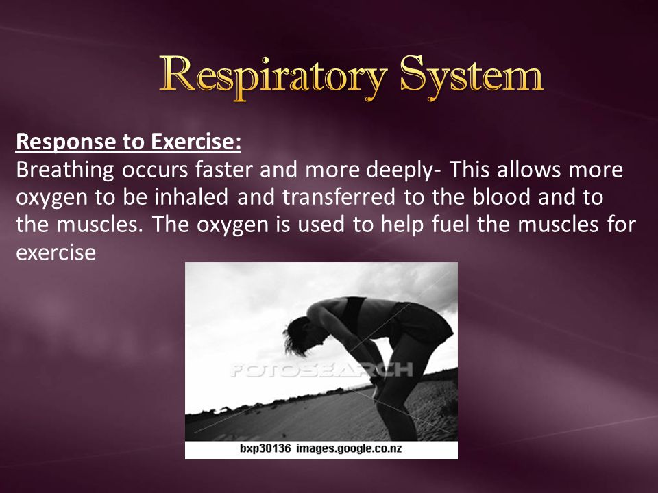 Respiratory System Response to Exercise: