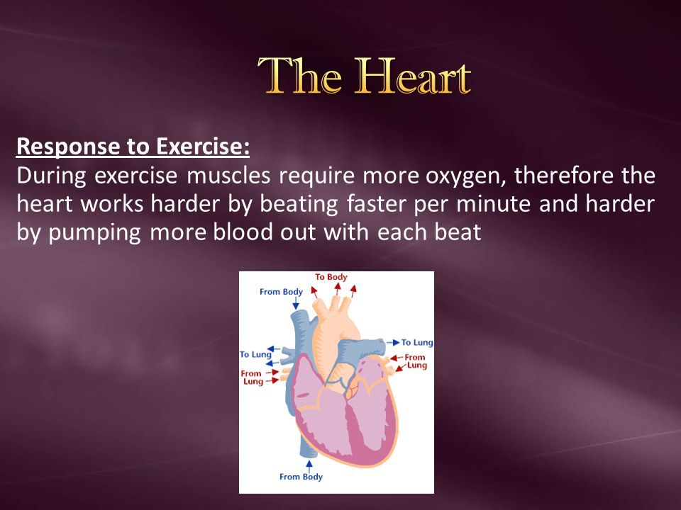 The Heart Response to Exercise: