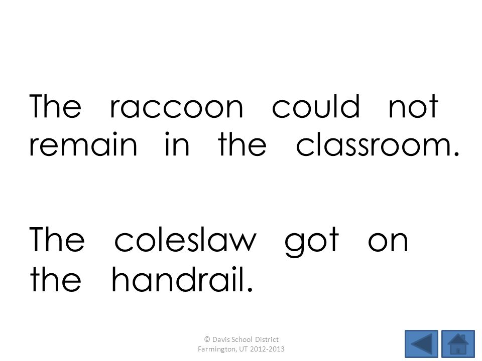 The raccoon could not remain in the classroom.
