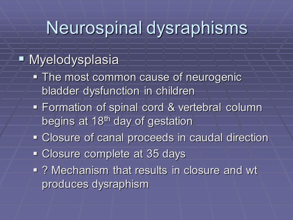 Neurospinal dysraphisms