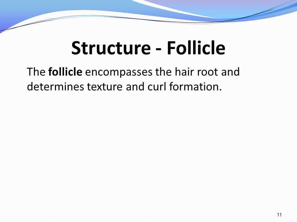Structure - Follicle The follicle encompasses the hair root and determines texture and curl formation.