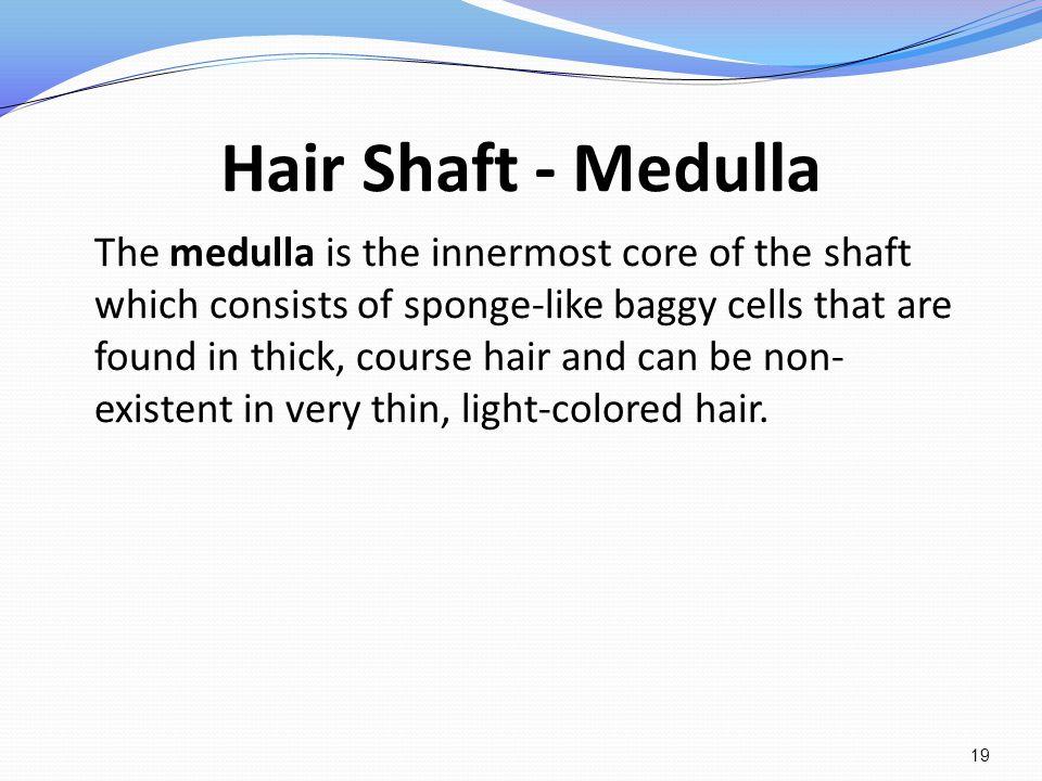 Hair Shaft - Medulla