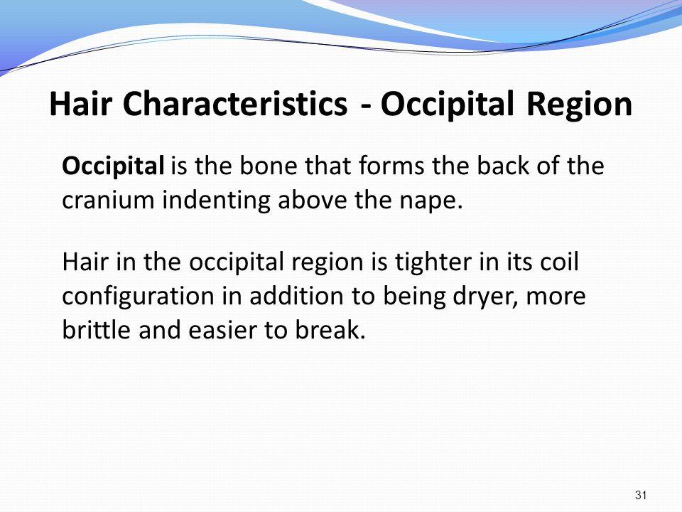 Hair Characteristics - Occipital Region