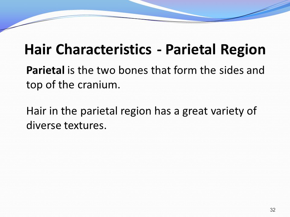 Hair Characteristics - Parietal Region