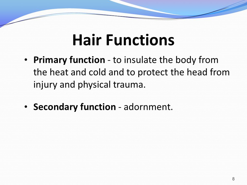 Hair Functions Primary function - to insulate the body from the heat and cold and to protect the head from injury and physical trauma.