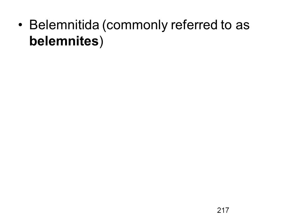 Belemnitida (commonly referred to as belemnites)