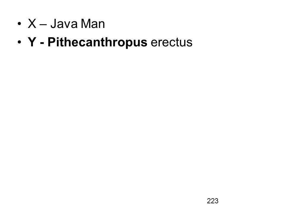 X – Java Man Y - Pithecanthropus erectus