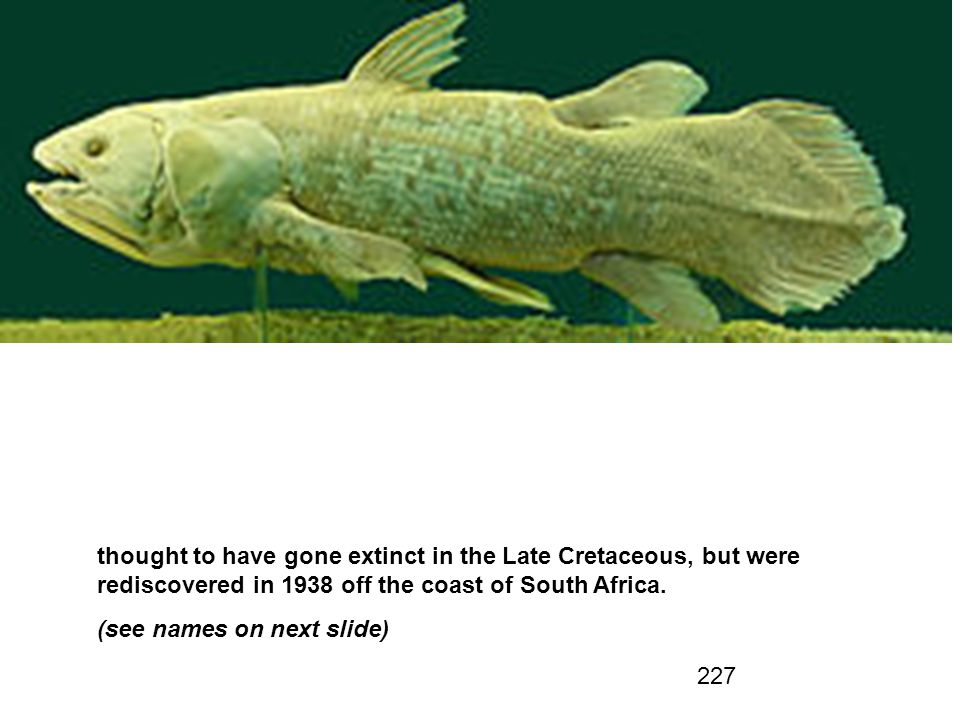 thought to have gone extinct in the Late Cretaceous, but were rediscovered in 1938 off the coast of South Africa.