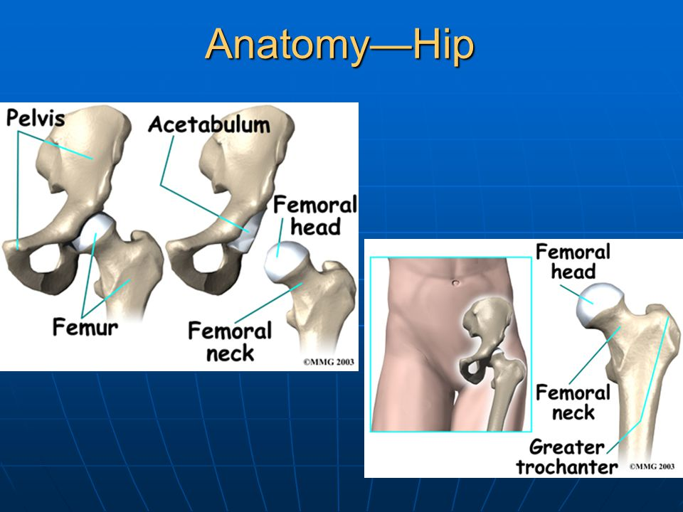Anatomy—Hip