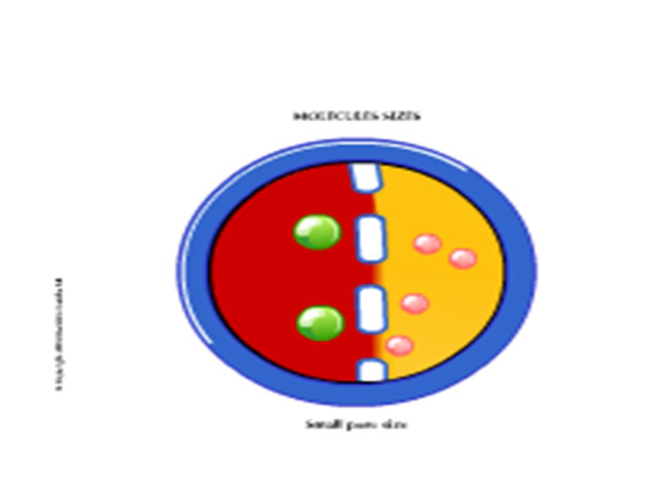 Molecular size: Both molecule size and pore size determine the solute flow through the semi-permeable membrane. As you can see from this picture we have a membrane with small pores. The pink molecule represent Urea molecules, which are considered small size molecules. The green molecules represents cytokine molecules, which are considered a middle size molecules. The (pink molecule) Urea easily passes through the small pores, but the (green molecule) Cytokines are to large to move across the membrane therefore they remain in the blood.
