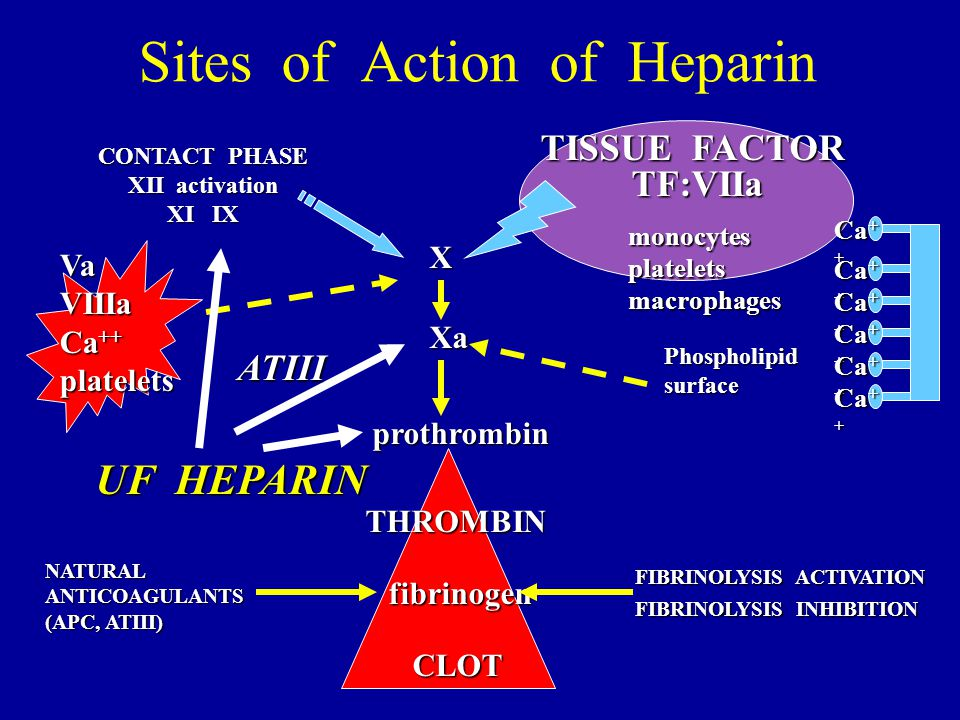 Sites of Action of Heparin