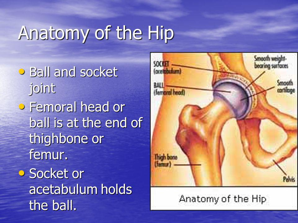 Anatomy of the Hip Ball and socket joint
