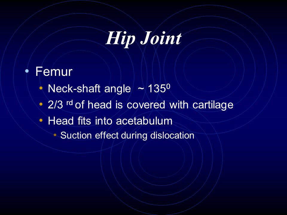 Hip Joint Femur Neck-shaft angle ~ 1350