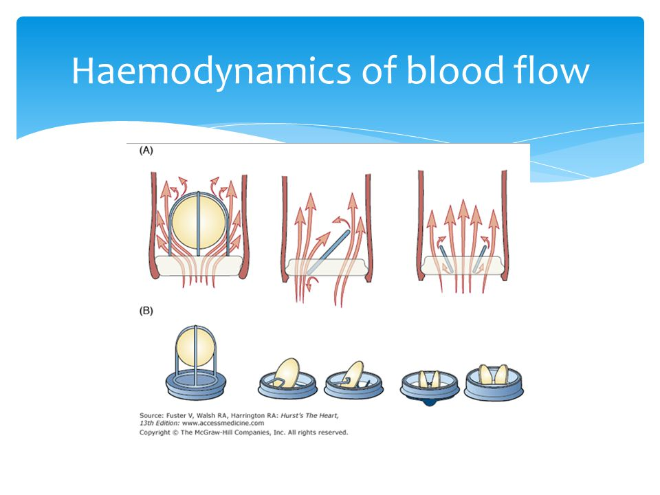 Haemodynamics of blood flow