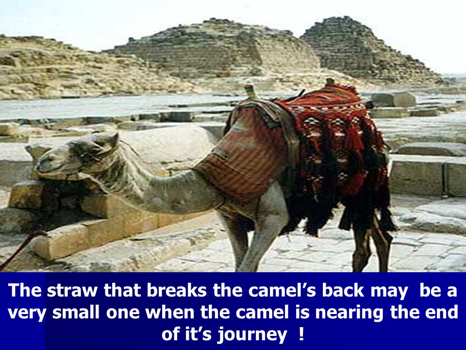 The straw that breaks the camel's back may be a very small one when the camel is nearing the end of it's journey !