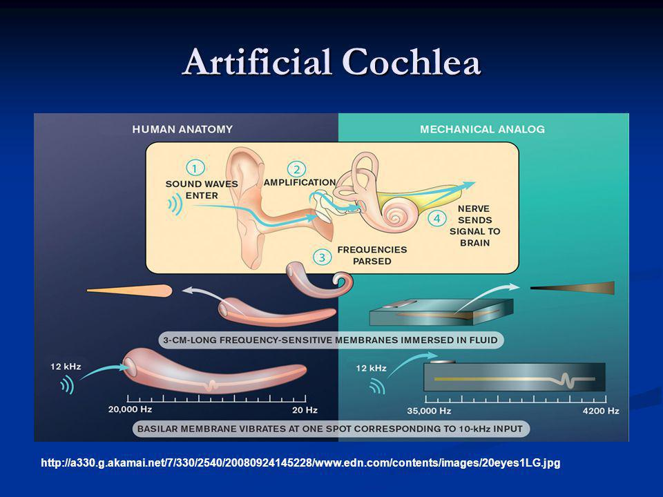 Artificial Cochlea Artificial cochlea: an example of structural processing.