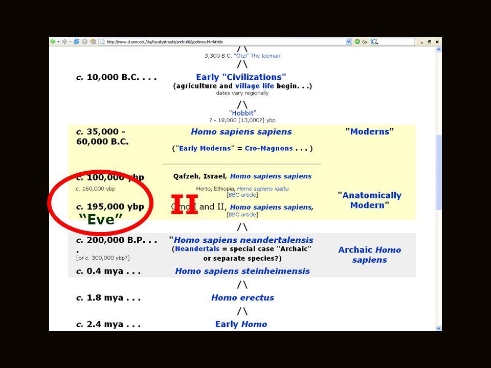 Eve II Eve Eve