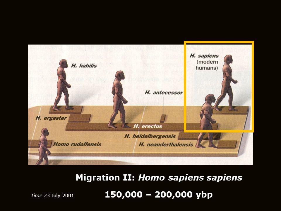 Migration II: Homo sapiens sapiens