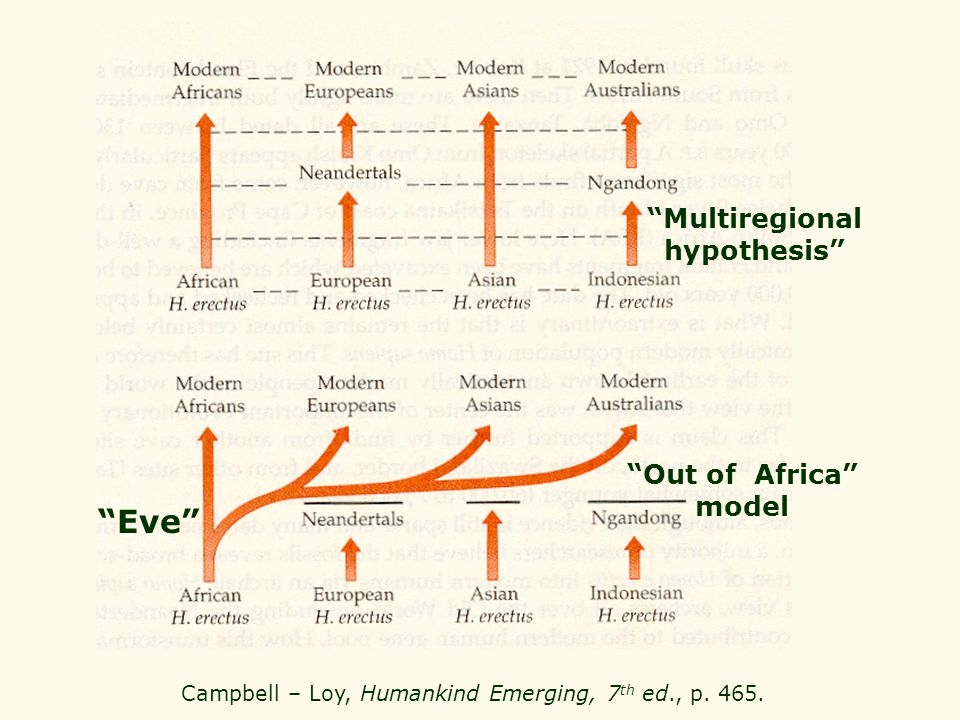 Campbell – Loy, Humankind Emerging, 7th ed., p. 465.