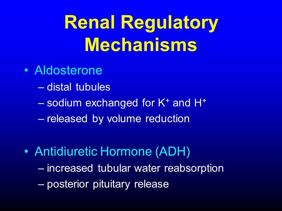 Renal Regulatory Mechanisms