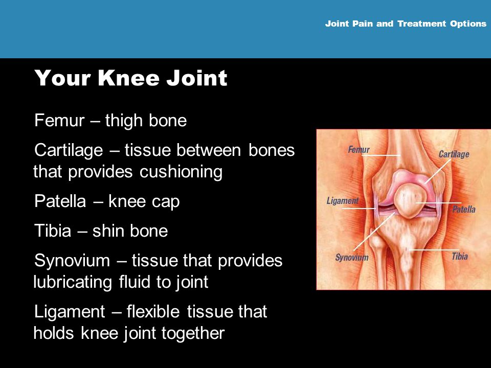 Your Knee Joint Femur – thigh bone
